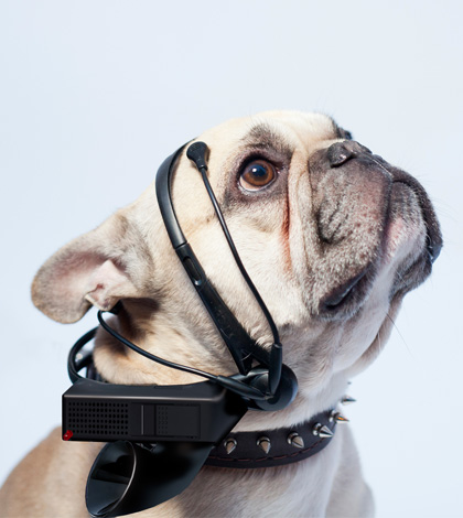 "Scientists are Developing a ""Translator for Dogs"""