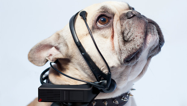 """Scientists are developing a """"translator for dogs"""""""