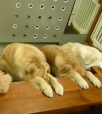 Meet the Dogs that Pray Before Eating