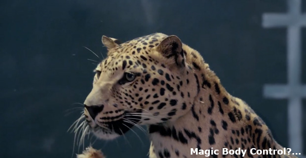 Jaguar responds to the latest commercial for Mercedes-Benz